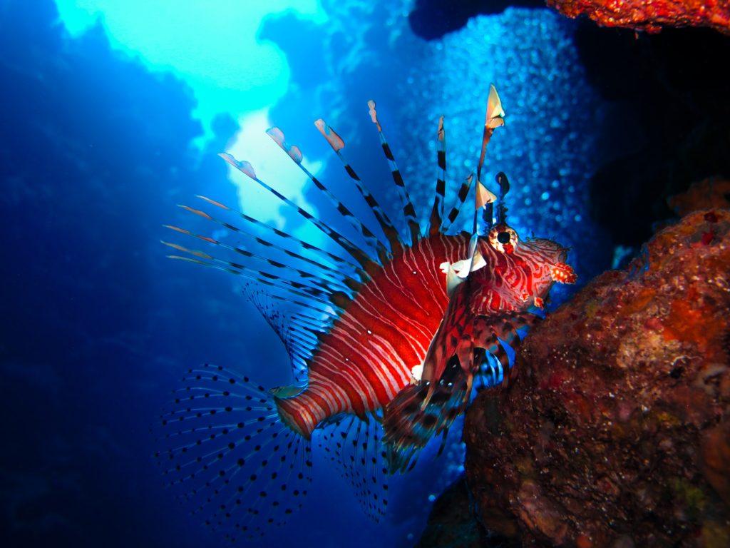египет рыбка